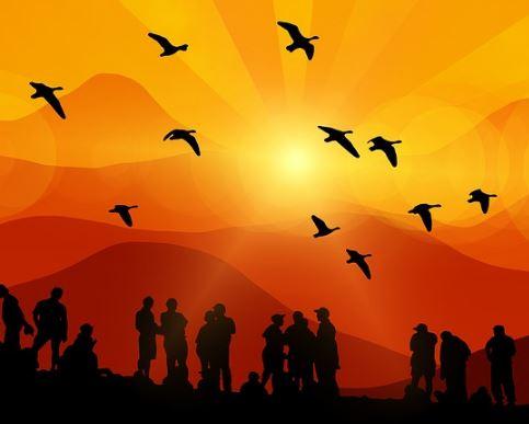 Find My Flock